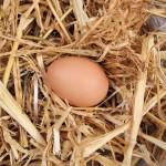 free range egg