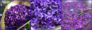 Pick your fresh violets and weigh them before adding boiling water.