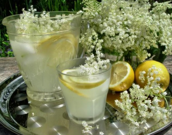 Old Fashioned Elderflower Cordial  An old recipe - 100 years old. This summer cordial is made with Elderflowers.........once made it can be mixed with sparkling wine, mineral water, lemonade or added to cooking for desserts.