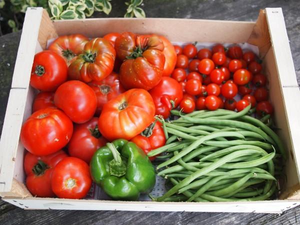 A Box of Allotment Vegetables