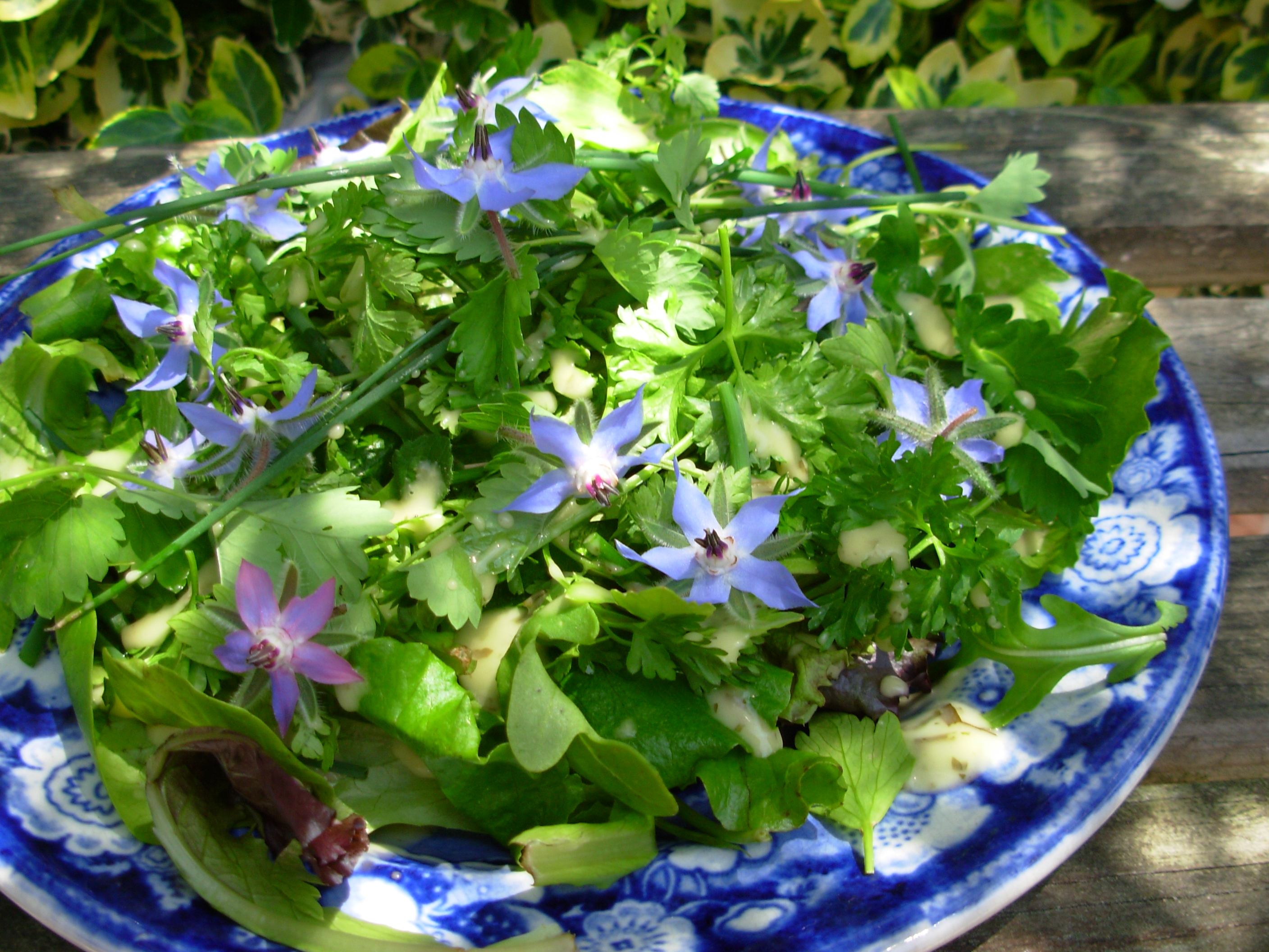 French Herb Salad