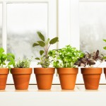 Herbs on Saturday ~ October Challenge: Win a copy of The Kitchen Herb Garden