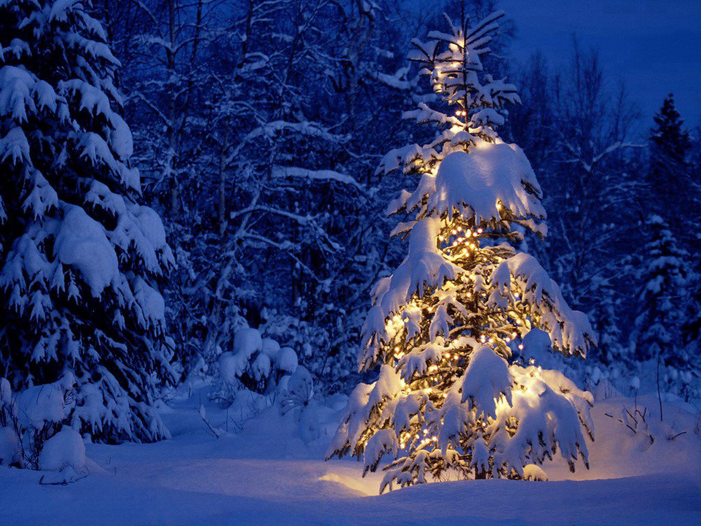 Snow Covered Magical Christmas Tree