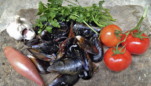 Provence Calling! Mussels with Tomatoes and Garlic for the 5:2 Diet (269 Calories) Guest Post