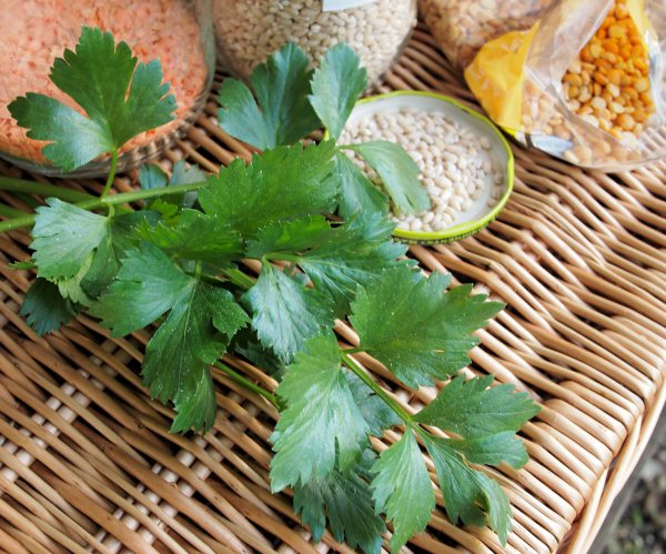 Lovage and Pulses