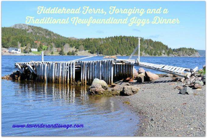 Fiddlehead Ferns, Foraging and a Traditional Newfoundland Jiggs Dinner