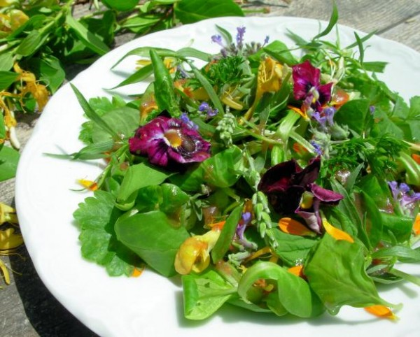 Elizabethan English Herb and Flower Salad with Honey Dressing recipe.