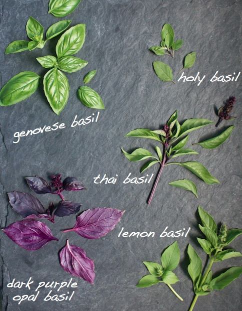 Cooking with Herbs - July Challenge: Beautiful Basil.........