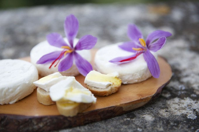 Chevre cheese with Saffron Honey and Saffron Flowers