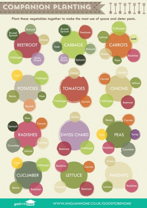 HD wallpapers printable vegetable companion planting chart