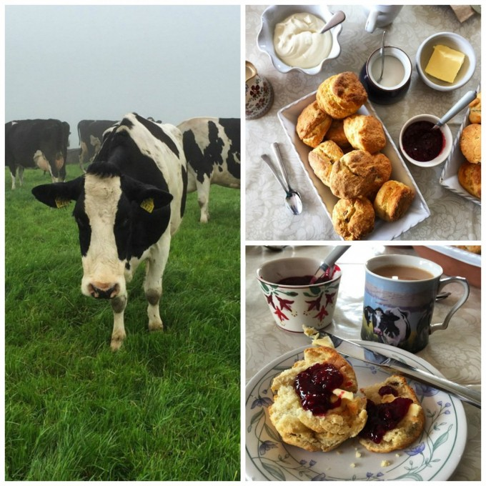 McCarthy's Farm, Ballymacredmond