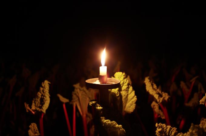 Rhubarb Shed Yorkshire
