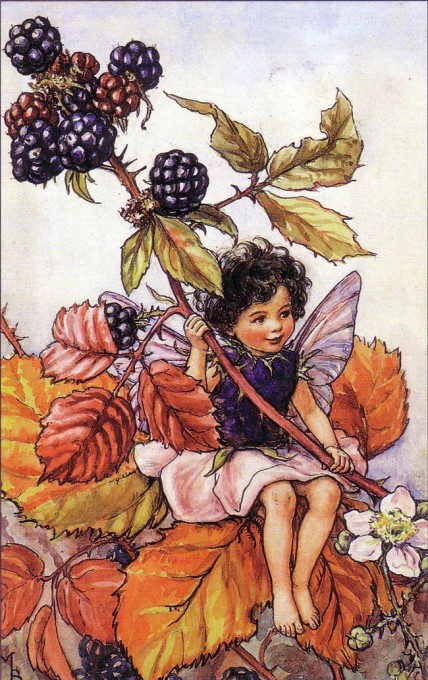 blackberry fairy