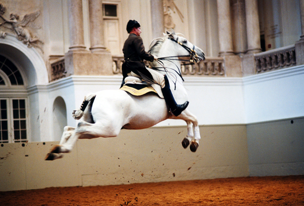 Lipizzaners and the Spanish Riding School