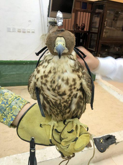 Falcons in Falcon Souq Doha Qatar