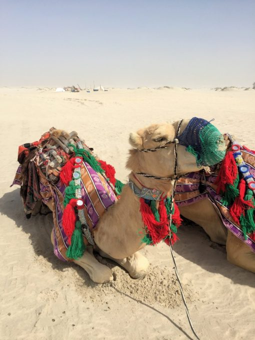 Camels, Dune Bashing and Beach BB