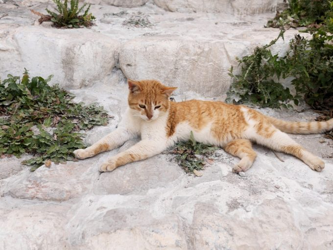 Cats of Astypalea