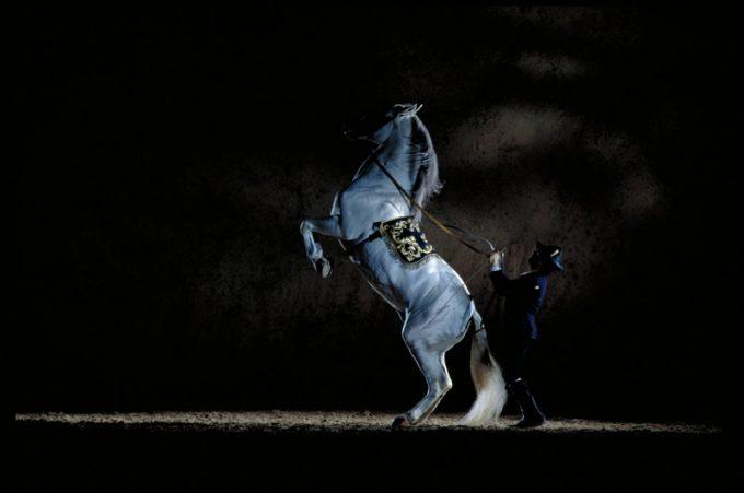 The Dancing Andalusian Horses