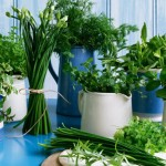 Cooking with Herbs: Spring Herbs Link-Up Party for March
