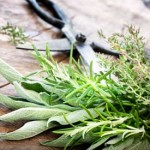Cooking with Herbs: Anything Goes for February