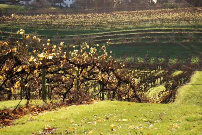 Three Choirs Vineyard