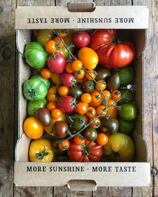 IOW Tomatoes