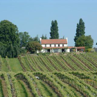Tasting English Wine at Three Choirs Vineyard