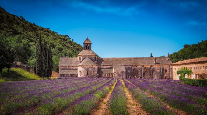 Lavender in France