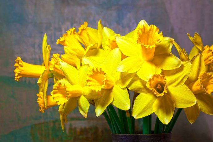 happy st david's day' in welsh - photo #21